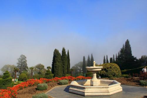 Сад фото 2