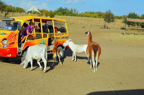 Страусиная ферма Сафари ранчь  фото 6