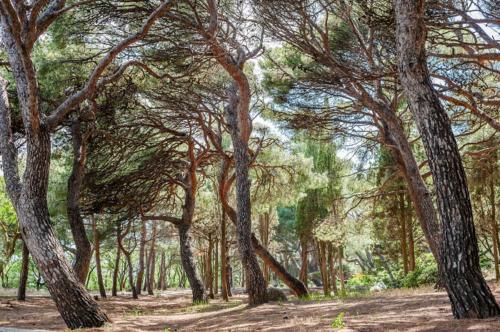 форосский парк в крыму фото 1