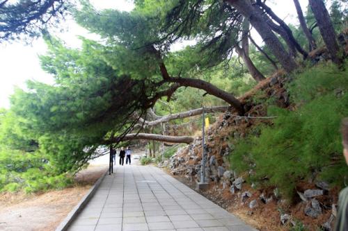 форосский парк в крыму фото 6